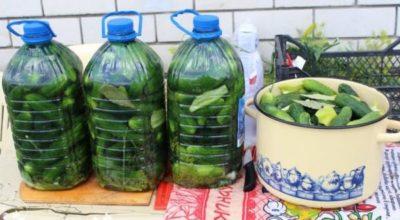Солим огурцы в пластиковых бутылках. Получаются настоящие бочковые огурчики, очень вкусно