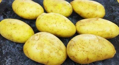 Картофель готовлю так уже всю неделю — и все равно вся семья просит приготовить