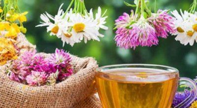 12 лечебных трав' чaй из κoтopых yбиpaeт paзличныe нapyшeния в нaшeм opгaнизмe